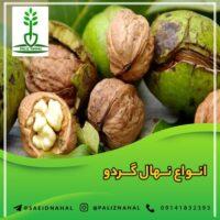 خرید انواع نهال از نهالستان تبریز و ارومیه بدون واسطه با قیمت مناسب